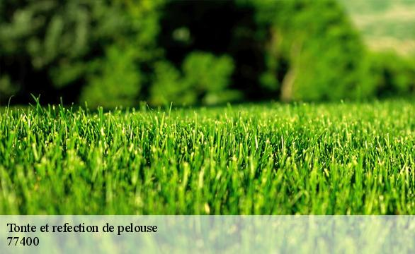 Tonte et refection de pelouse  77400