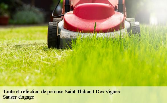 Tonte et refection de pelouse  saint-thibault-des-vignes-77400 Ferret Elagage