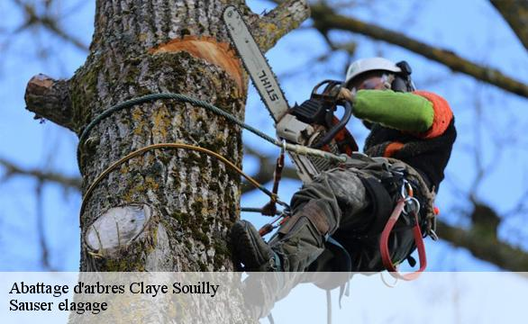 Abattage d'arbres  claye-souilly-77410 Ferret Elagage